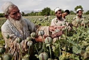 Opium Poppy Farmers Afghanistan